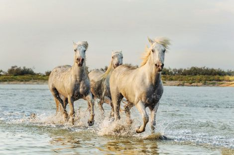 Wild-Horses-Cumberland-Island_g9mmun